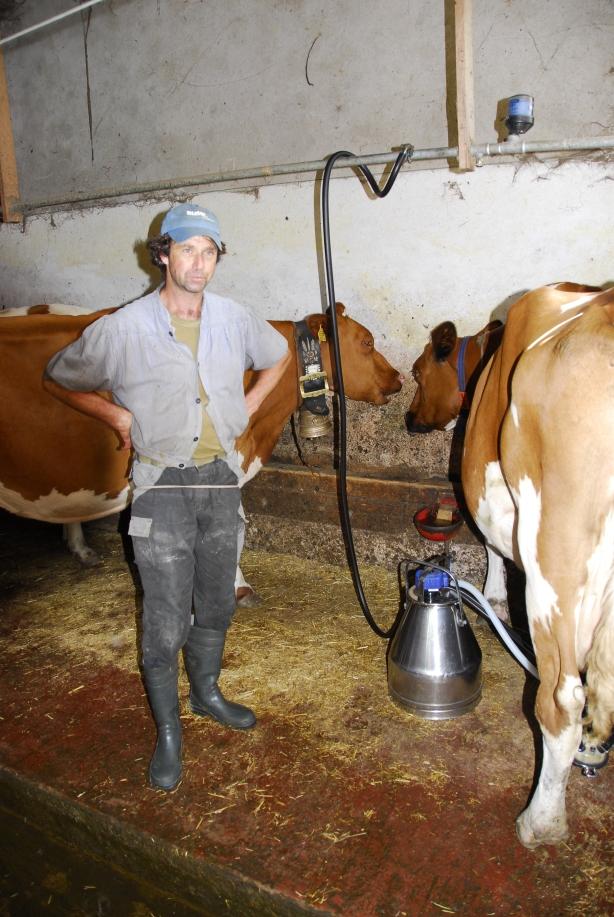 Ladina und Berna: Die ersten glücklichen, LeisegeMolkenen Kühe der Alp Rosenlaui
