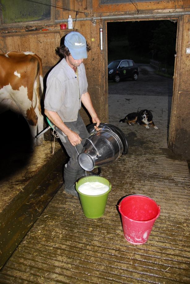 Morgenmilch ist die beste Milch.